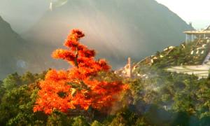 Tree_Digital-H264_MOV_1920x1080_16x9.mov.00_00_04_18.Still001_edited
